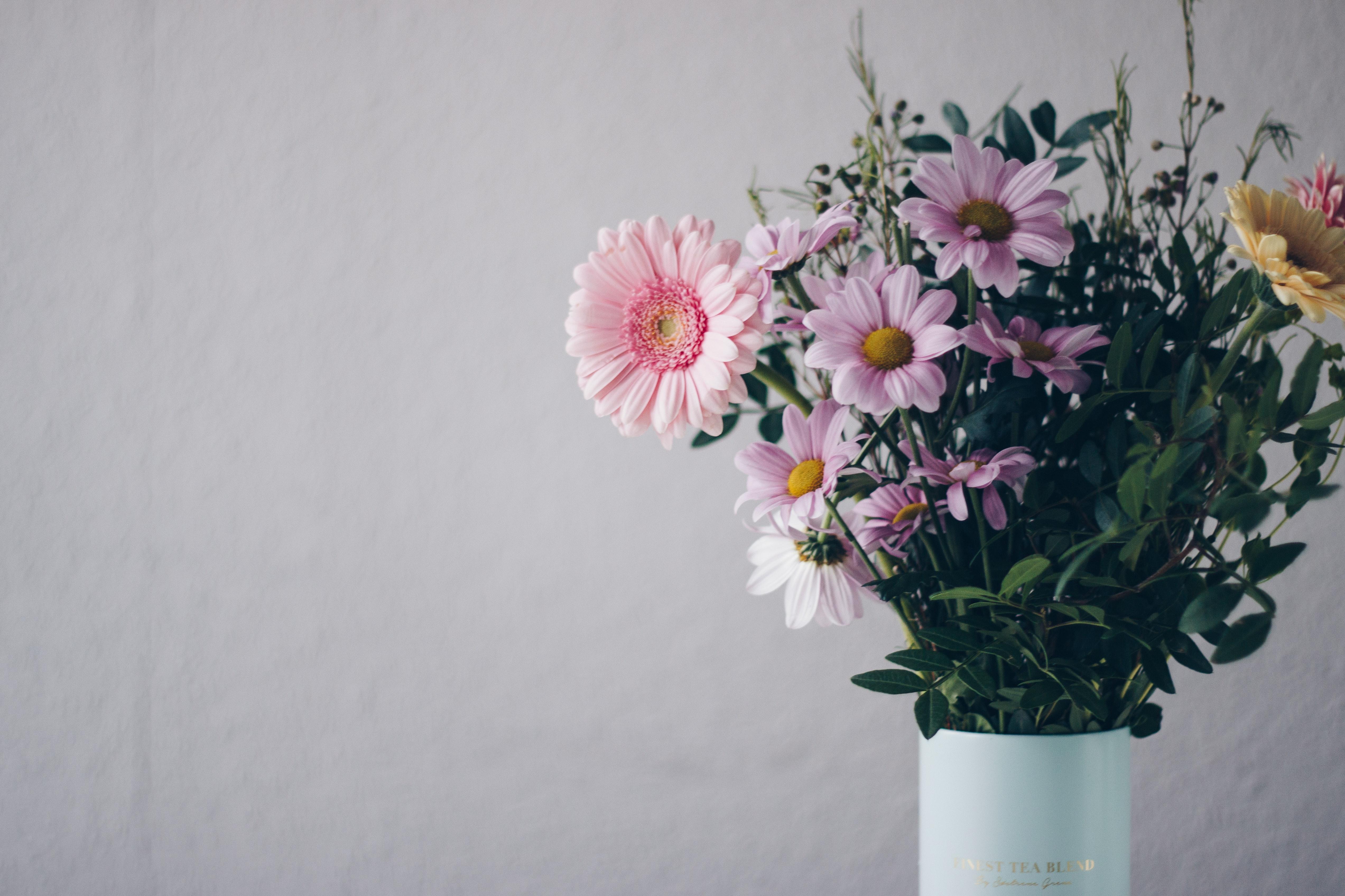 beautiful-bloom-blooming-1563650